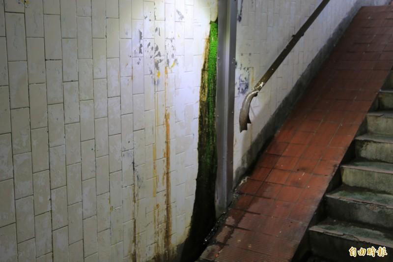 牆面長期滲水,已出現黃色水漬及青苔。(記者鄭名翔攝)