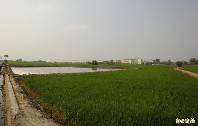 綠能業者在官田區洽談租地的區塊,目前是一片完整的水田濕地,扮演著重要的鳥類棲息地的角色。(記者楊金城攝)