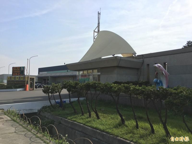 台灣玻璃館門口就有玻璃纖維的白海豚。(記者劉曉欣攝)