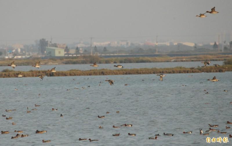 台電將在將軍鹽田設置太陽光電電廠,地點在南26線兩側(遠處),並避開旁邊候鳥棲息熱區(前)。(記者楊金城攝)
