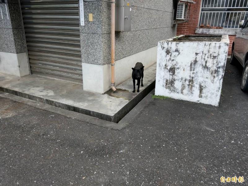 疑似動手追咬女童的流浪狗,今早仍在園區旁空地徘徊。(記者張議晨攝)