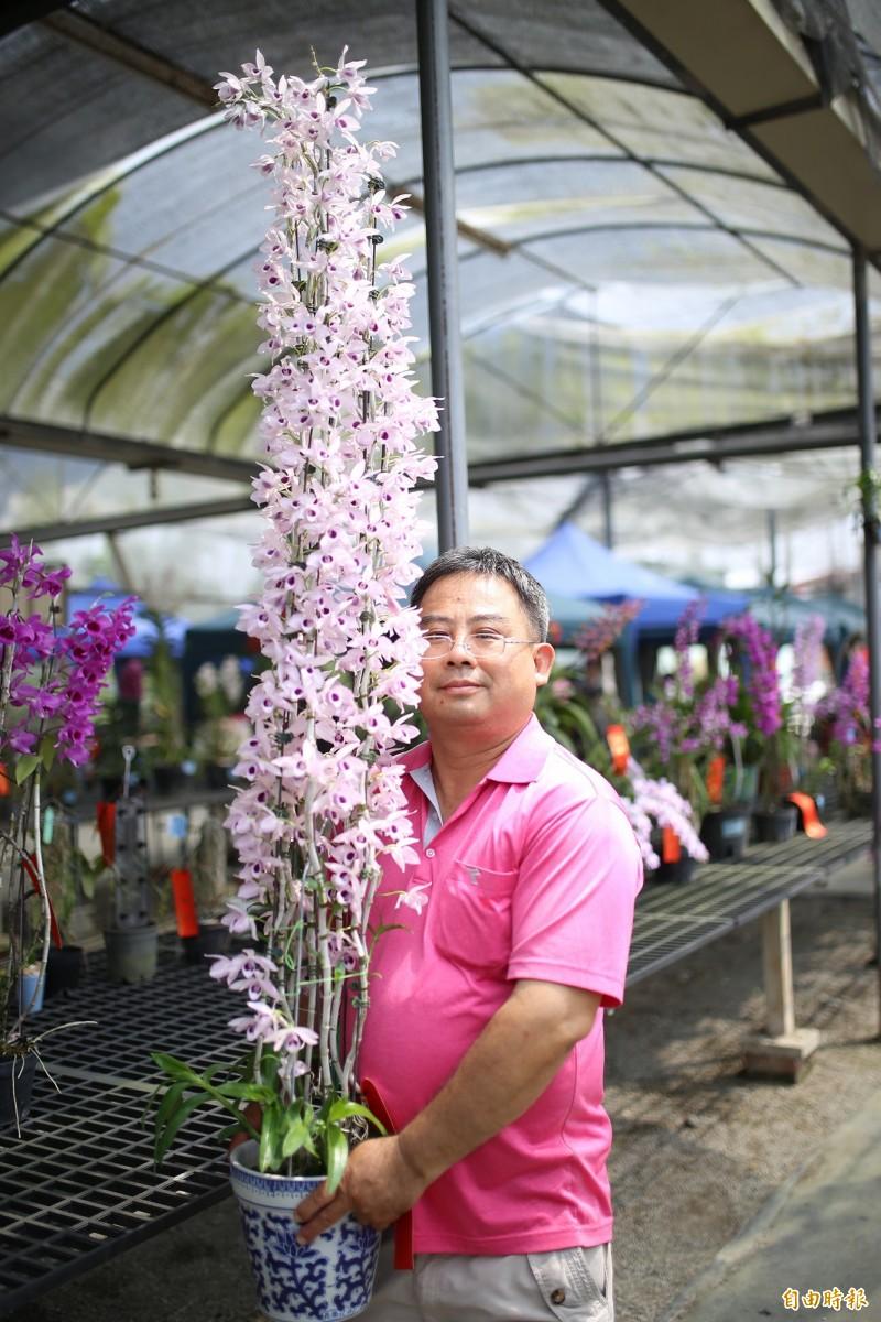 九如北玄宮蘭展今年邁入第21年,共展出7大蘭屬、800盆蘭花。(記者邱芷柔攝)