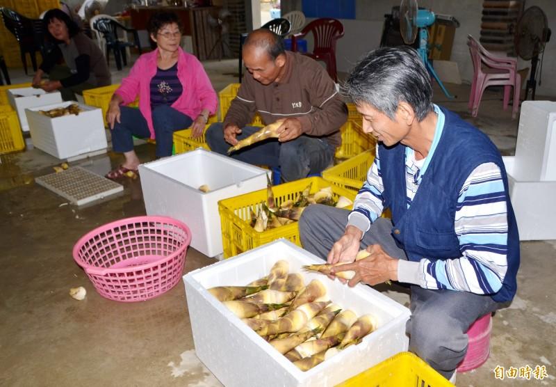 龍崎農民綠竹筍嚴格分級後,進行裝箱。(記者吳俊鋒攝)