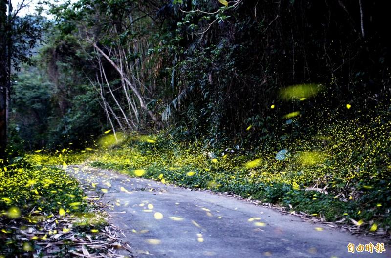 南化關山社區的「大光廊」,螢火蟲已經爆量現蹤。(記者吳俊鋒攝)