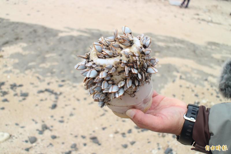 海洋廢棄物嚴重,由塑膠瓶上長滿藤壺就能看出端倪。(記者劉禹慶攝)
