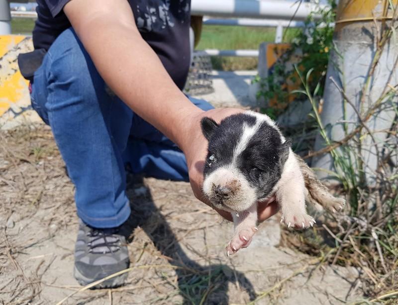 台灣動物緊急救援小組從電桿下救出1隻幼犬,讓母子狗一家8口團圓。 (台灣動物緊急救援小組提供)