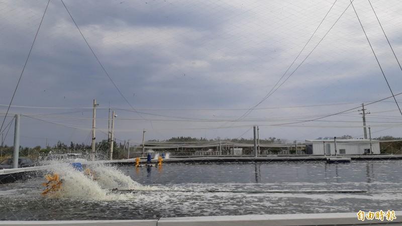 知本海邊的白蝦養殖池。(記者黃明堂攝)
