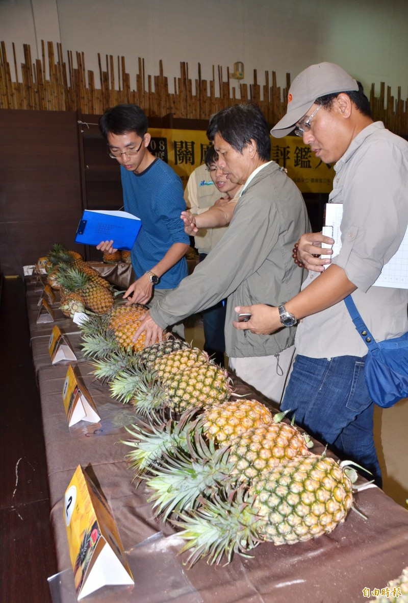 裁判們仔細檢視參賽的金鑽鳳梨,針對外觀標準來評分。(記者吳俊鋒攝)