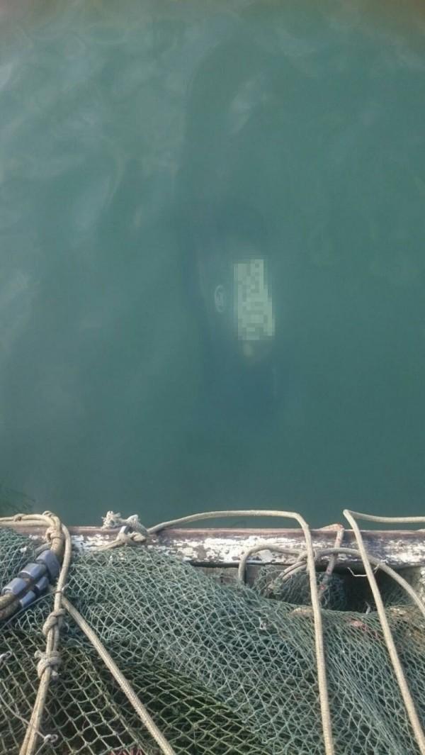 東石漁港2車落水「發現槍枝」 駕駛失聯