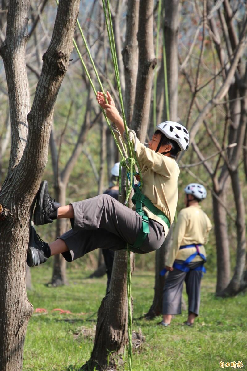 攀樹可以單兵自我挑戰,也可以團隊合作。(記者黃美珠攝)