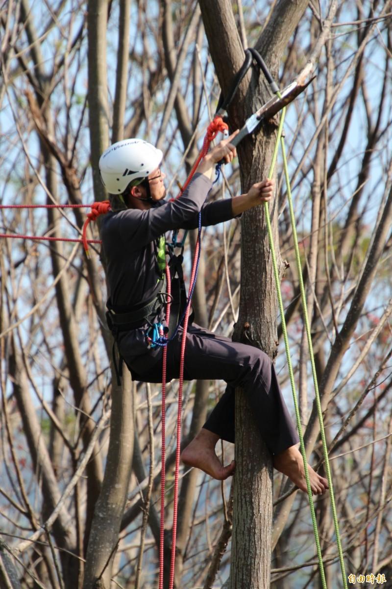 攀樹的小孩,會視自己的需求,決定哪些枯枝需要修除,一如其他領域的學習,慢慢會找到自己的方向。(記者黃美珠攝)