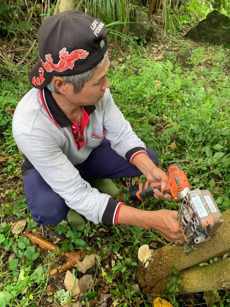 農委會特生中心、新竹縣政府和保育團體,近期在飛鳳山裝設紅外線自動相機,觀察是否有石虎出沒。(圖由新竹縣政府農業處提供)