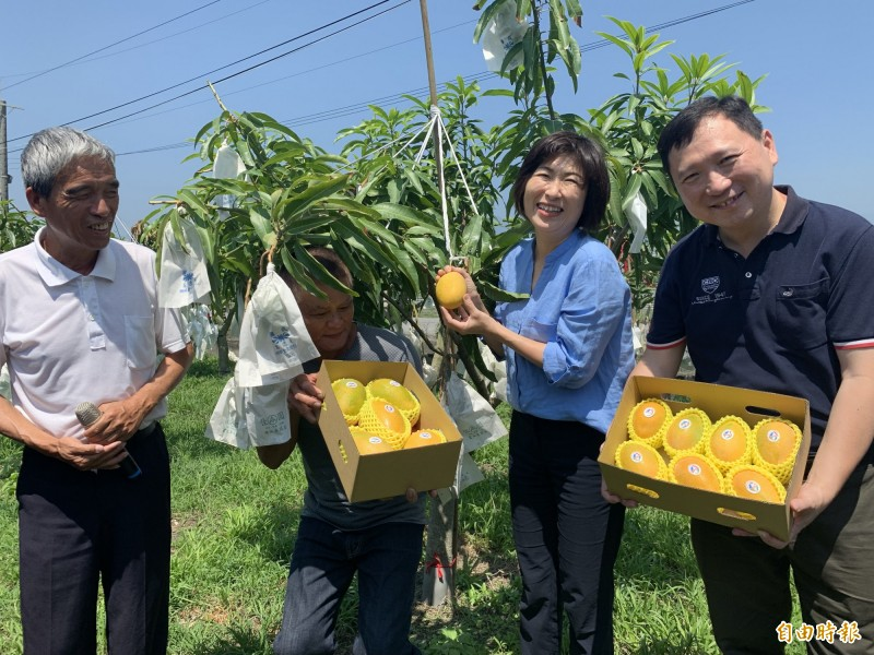 LV grade summer snow mango production Fengtai East County government marketing strategy