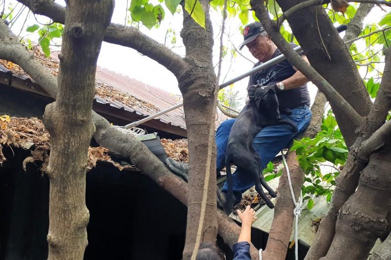 台灣動物緊急救援小組救一隻受困廢棄的老舊宿舍屋頂長達一週的流浪犬。(記者蔡清華翻攝)