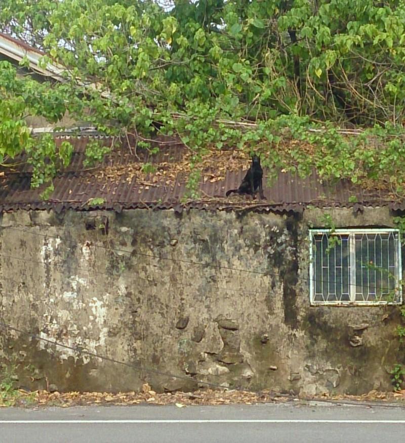 黑狗困屋頂又老舊無法採踏,為高難度救援。(記者蔡清華翻攝)