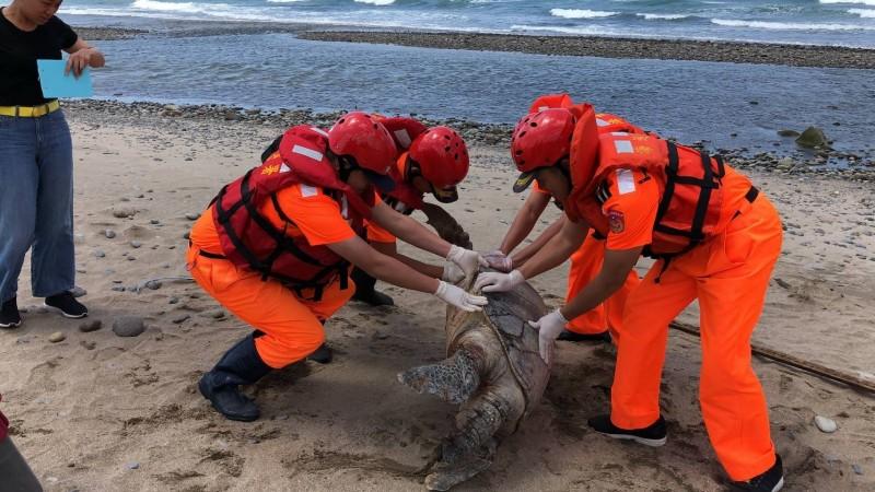 一隻巨型綠蠵龜今天近午被發現「陳屍」在新北市石門區老梅沙灘。(記者林嘉東翻攝)