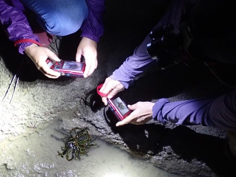 洪清漳常帶著同好,不分晝夜,守候在金門潮間帶紀錄生物活動情形。(圖由洪清漳提供)