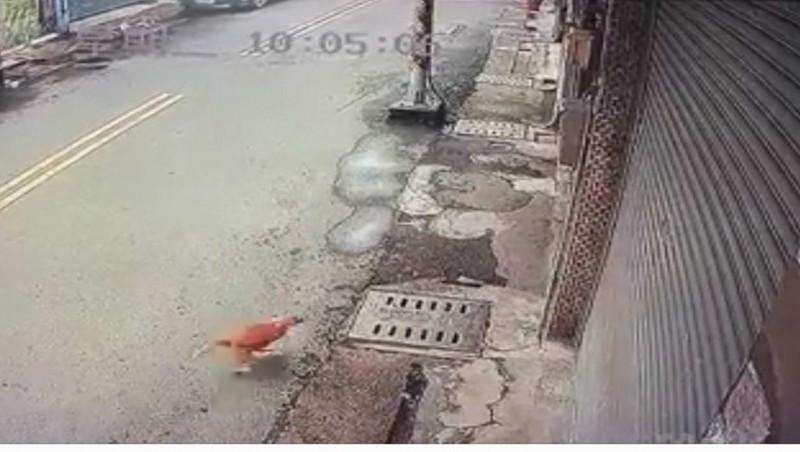 1隻家貓被10幾隻流浪狗追咬,火速衝入民宅騎樓躲藏。(翻攝臉書《貓狗龜殼花論壇》)
