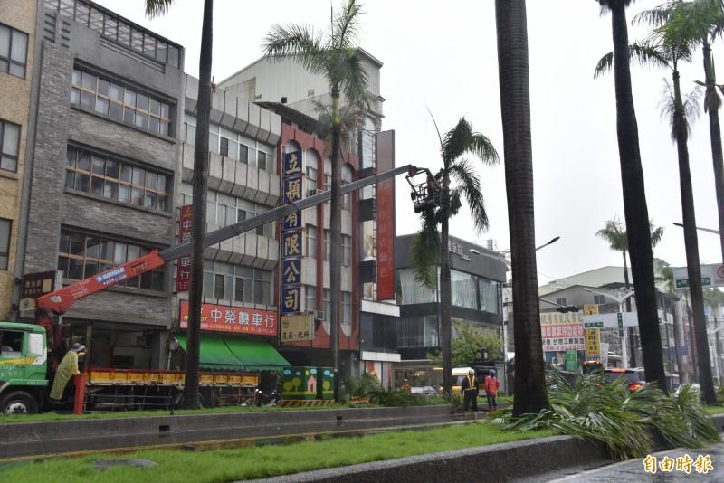 屏東市椰林大道將自然消失,公路總局說,大王椰子樹死亡不再補植。(記者葉永騫攝)