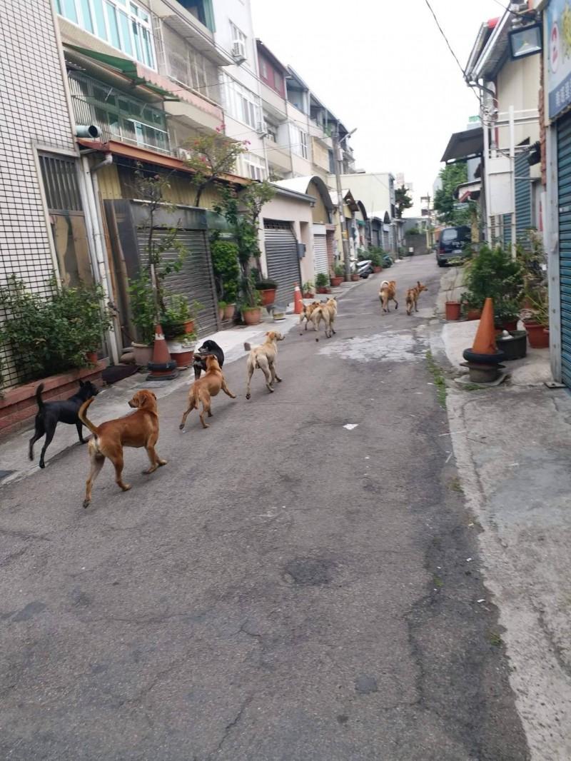 彰化市街頭出沒流浪狗群聚,流浪狗干擾民眾生活的問題,引發民眾討論。(圖彰化踢爆網LINE一組群提供)