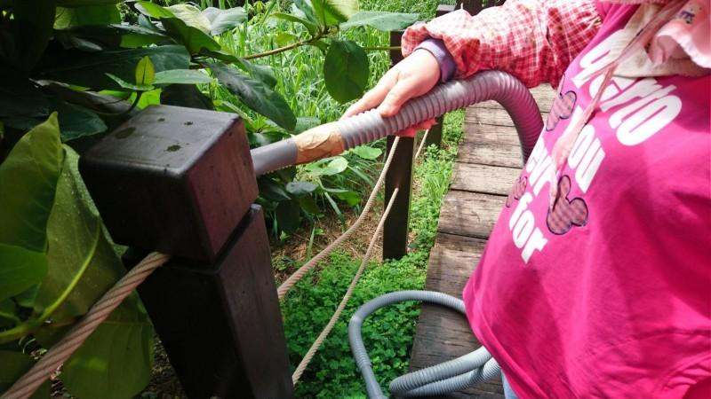 觀旅局派員以吸塵吸清除大坑步道扶手上的荔枝椿象。(市府提供)
