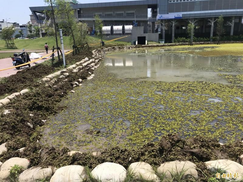 圓林園生態池被「人厭槐葉蘋」攻佔,縣府展開清除。(記者顏宏駿攝)