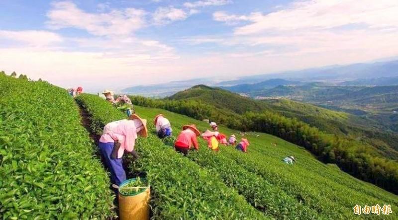 南投縣鹿谷鄉大崙山風景如畫,也是縣內重要的茶區之一。(記者謝介裕攝)