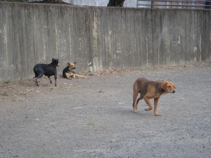 永和山水庫附近常有流浪犬徘徊,有些甚至會主動追車、襲人。(記者鄭名翔翻攝)