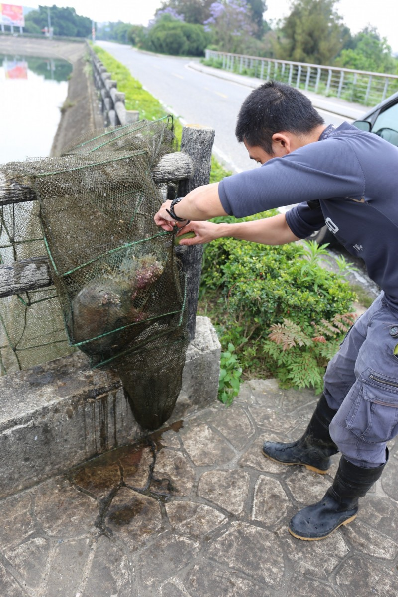 保育人員準備將蜈蚣網內的死亡水獺取出。(圖由金門縣政府提供)