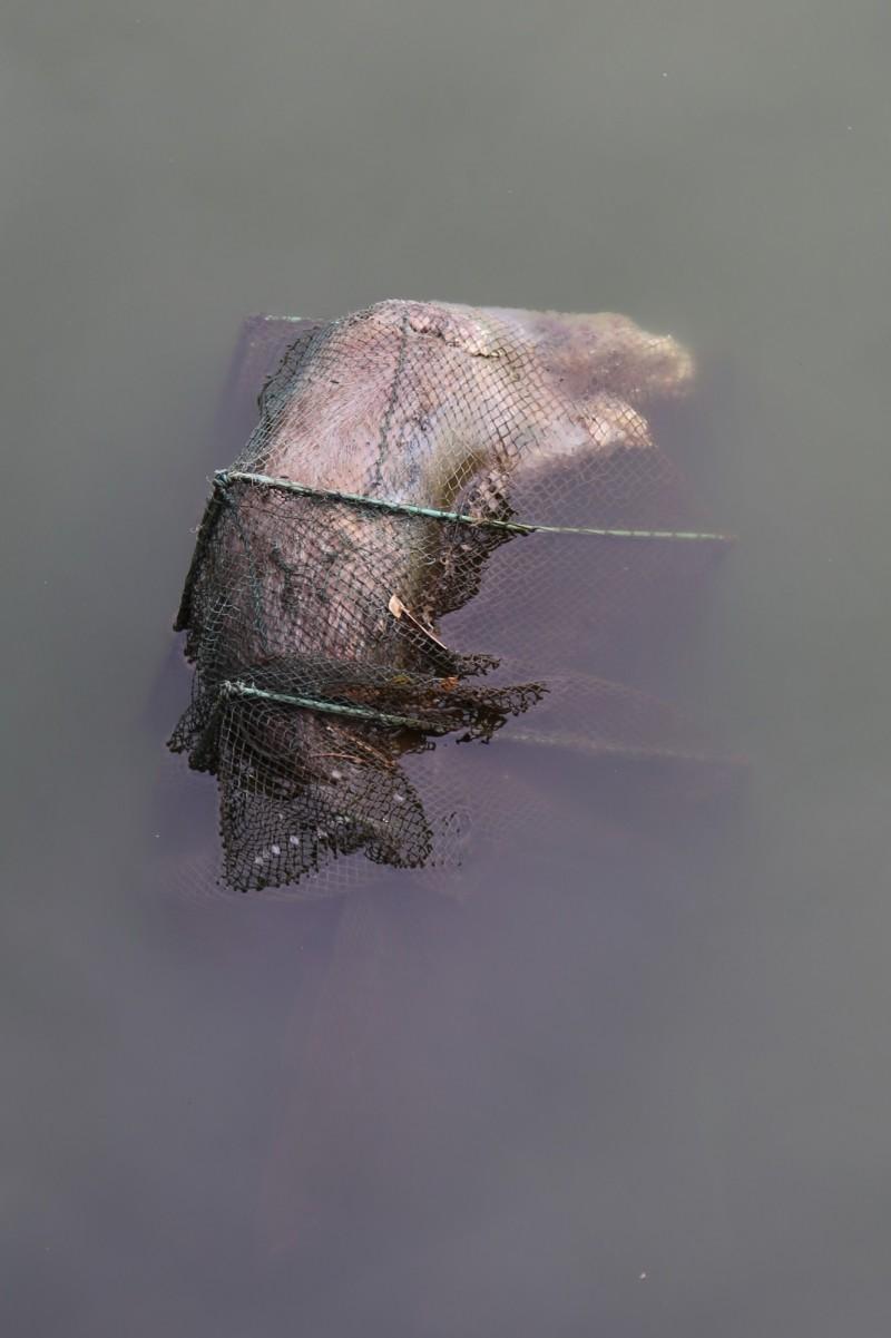 保育人員發現一隻水獺疑誤闖蜈蚣網溺斃於金沙水庫。(圖由金門縣政府提供)
