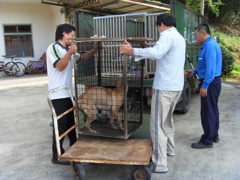 寶山鄉公所清潔隊推估全鄉流浪狗數量5、600隻,結紮數不到一成;過去1年捕捉逾200隻,2017年動保法修法之後,驟減不到10隻。(記者廖雪茹翻攝)