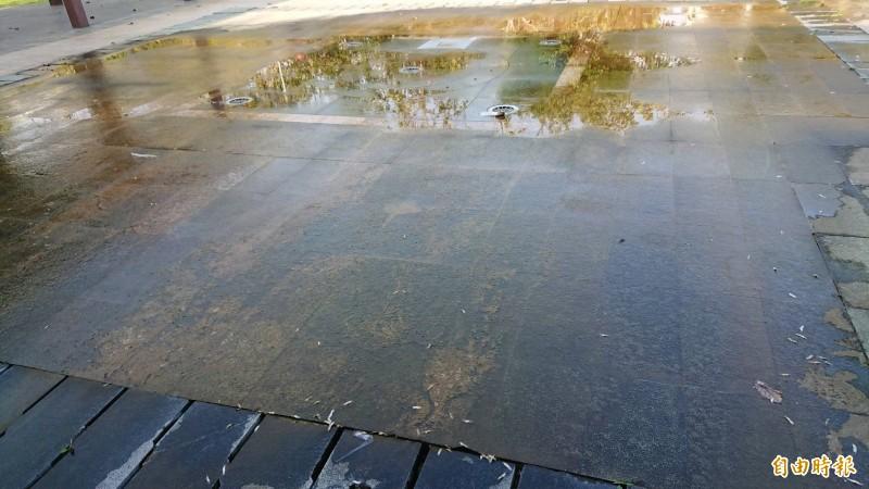 嘉義市議員孫貫志說,文化公園小型噴水池地面濕滑有青苔,市府建設處疏於管理清理。(記者丁偉杰攝)