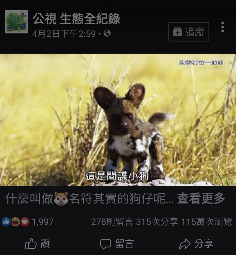 公視生態全紀錄「間諜系列」動物紀錄片,每集都有讓動物們以為是真的動物的「間諜動物」。(記者陳鈺馥翻攝)