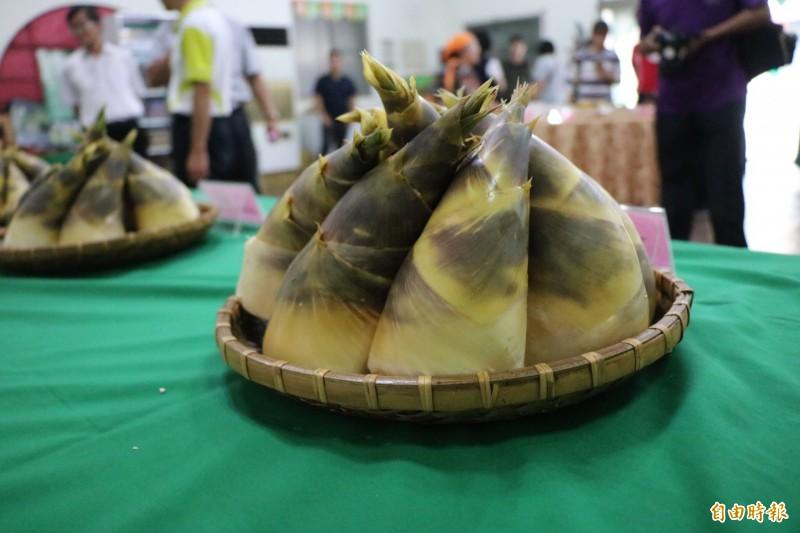 台南龍崎因地質關係,很適合種植綠竹筍。(記者萬于甄攝)