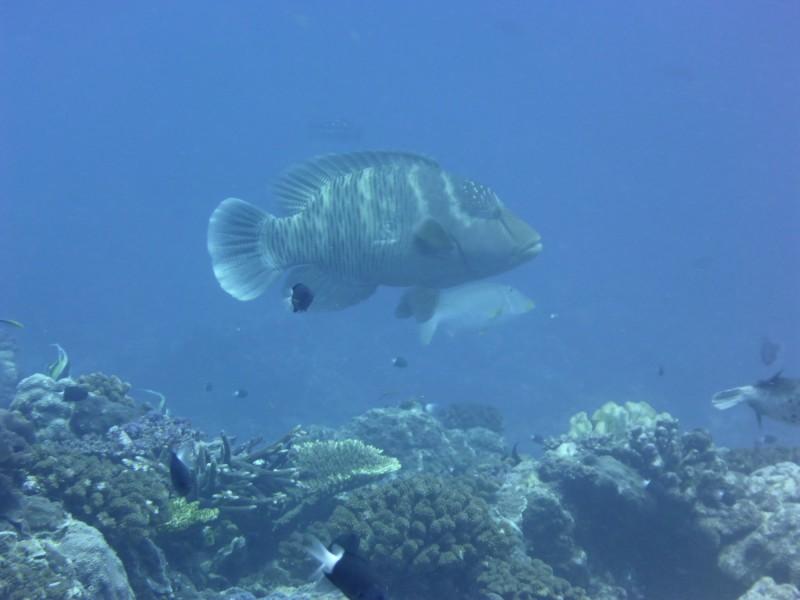 台中當舖日友機車借款分享生活綜合新聞在東沙環礁水深25公尺處,首次拍到龍王鯛,體長約60公分。