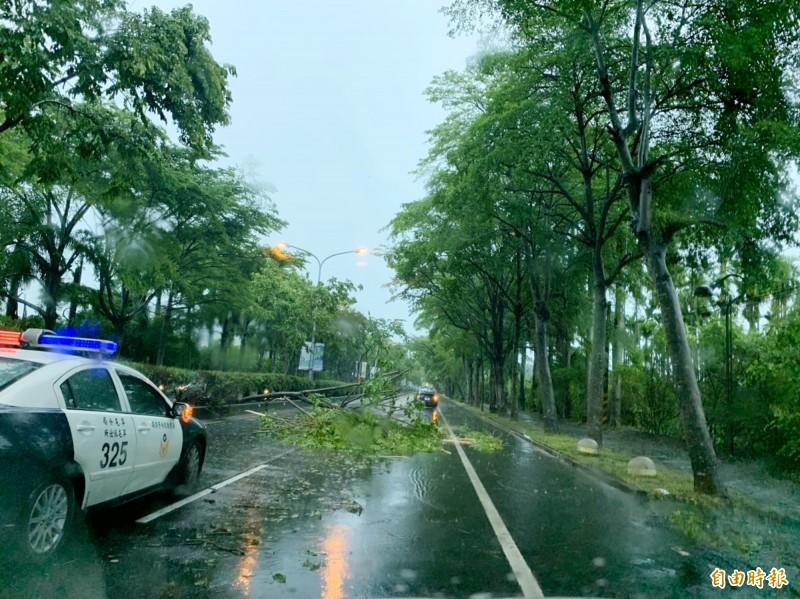 屯鎮省府路段行道樹倒塌擋在道路中央。(記者陳鳳麗攝)
