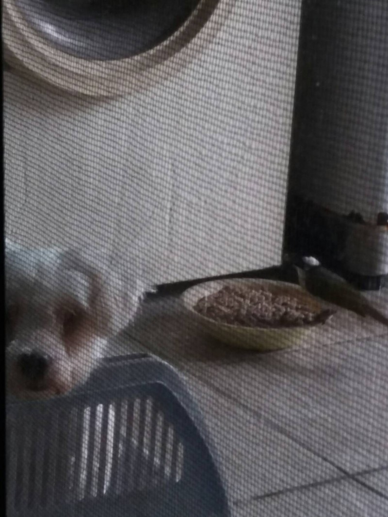 宜蘭曾姓社工員的愛犬(左),最近被誤會超會吃,現在查出狗飼料遭白頭翁(右)吃光光。(圖由曾姓社工員提供)