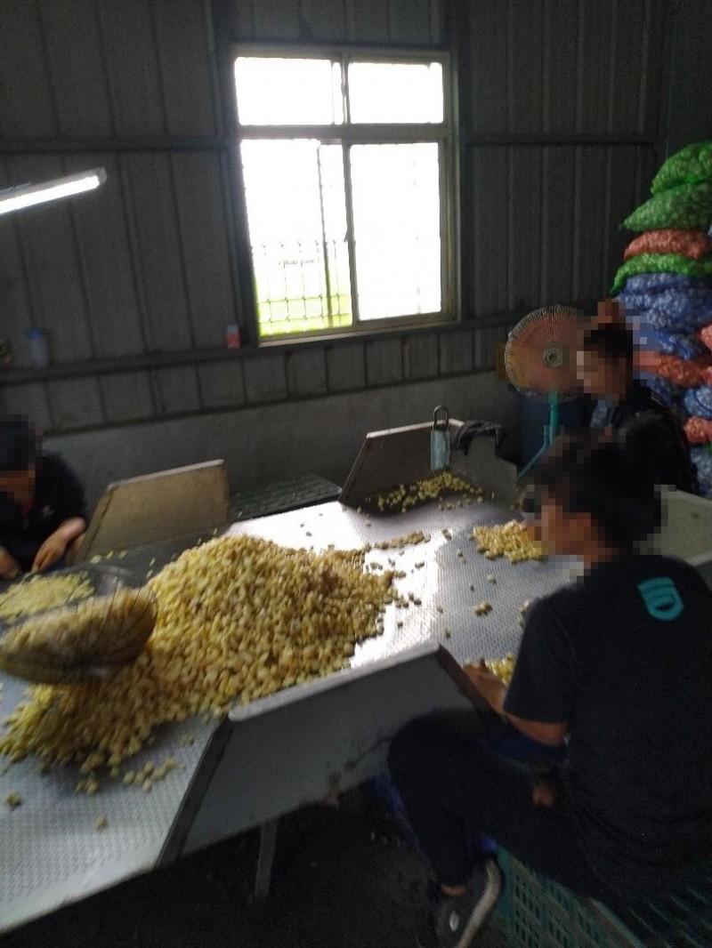 外籍移工從事農業工作。(記者林國賢翻攝)