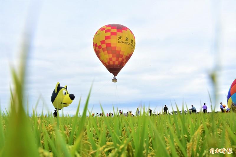 冬山鄉公所在冬山稻間美徑升起熱氣球,水稻田搭配鮮豔熱氣球,美景盡收眼底。(記者張議晨攝)