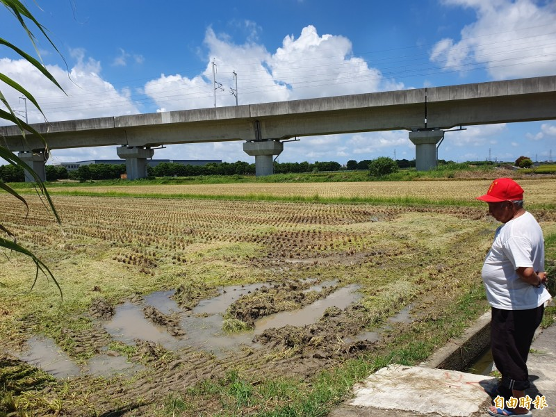 新營區傳出3甲多的稻作一夕之間被盜割,農民今日清晨巡田時看見空蕩蕩的稻田,當場傻眼。(記者王涵平攝)