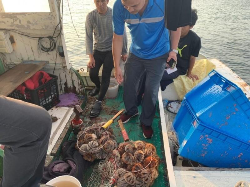 馬糞海膽尚未開放,就有漁船盜採多粒海膽。(澎湖環保查察小組提供)