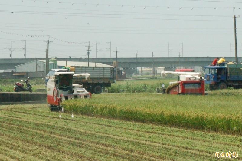 雲林縣農業處呼籲農民不要搶收青割稻作。(記者林國賢攝)