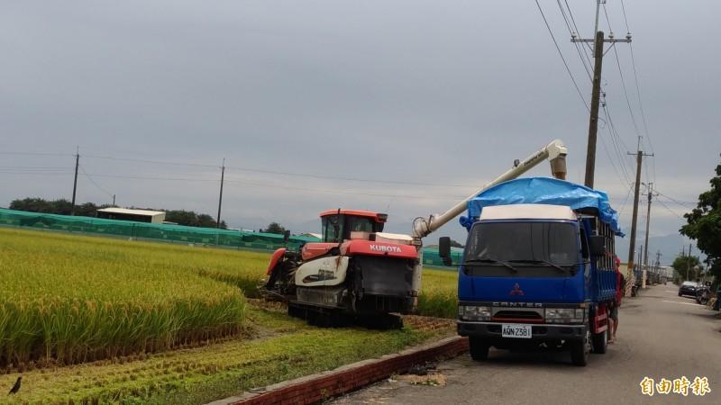 擔心氣候不穩,田間一期稻出現搶割潮。(記者廖淑玲攝)