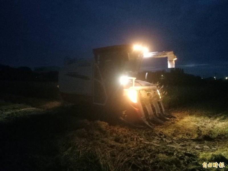 擔心稻作倒伏,農民漏夜搶收。(記者廖淑玲攝)