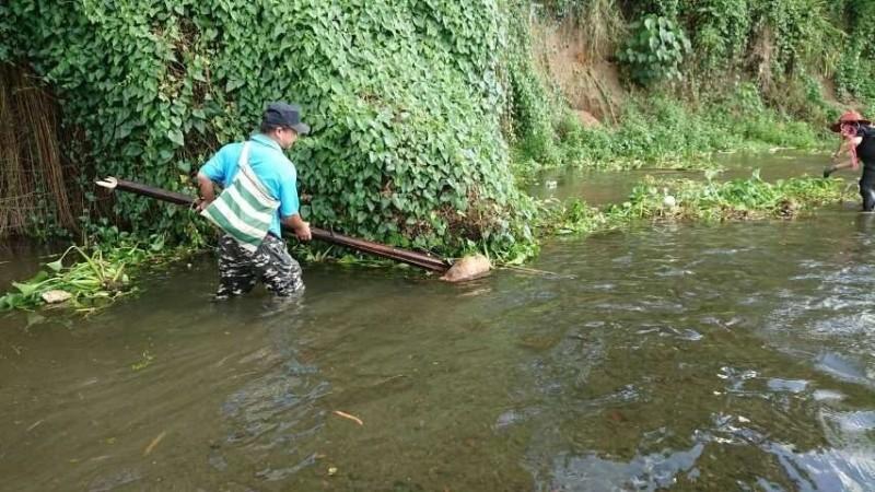 近日卻有民眾發現外來植物「刺軸含羞木」入侵佳平溪,引響水流與遊憩安全,當地村民與環保志工捲袖下水清理河道。(蔡森泰提供)