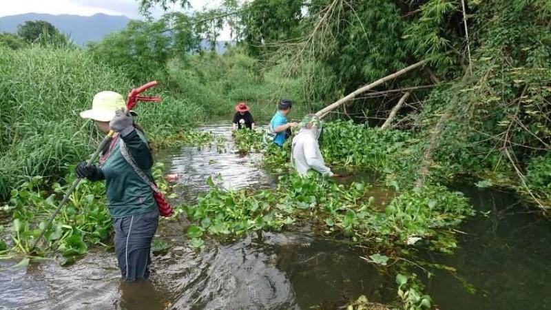 外來植物入侵佳平溪,影響水流與遊憩安全。(蔡森泰提供)
