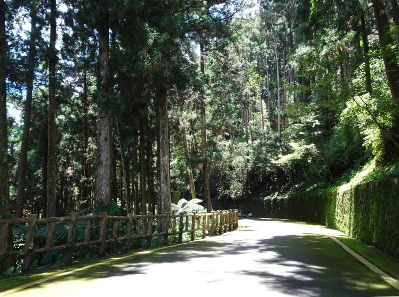擁有美麗樹海的藤枝森林遊樂區,是南台灣著名的避暑勝地。(記者黃佳琳翻攝)