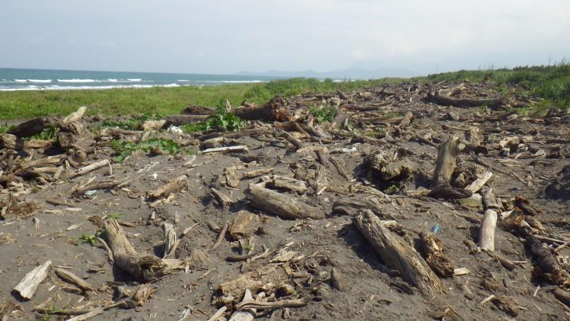 宜蘭五結鄉蘭陽溪口南岸的漂流木臨時堆置場,6月24日開放宜蘭人撿拾。(記者張議晨翻攝)