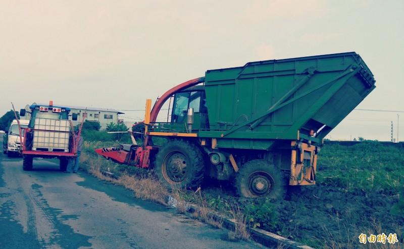 收割機先採收玉米植株切碎。(記者楊金城攝)