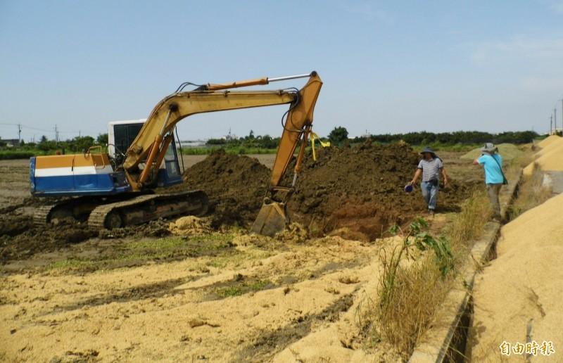 挖坑洞再將玉米稉丟入坑洞加上烏肥後覆土完成銷毀掩埋。(記者楊金城攝)